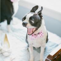Cães participam do casamento de seus donos